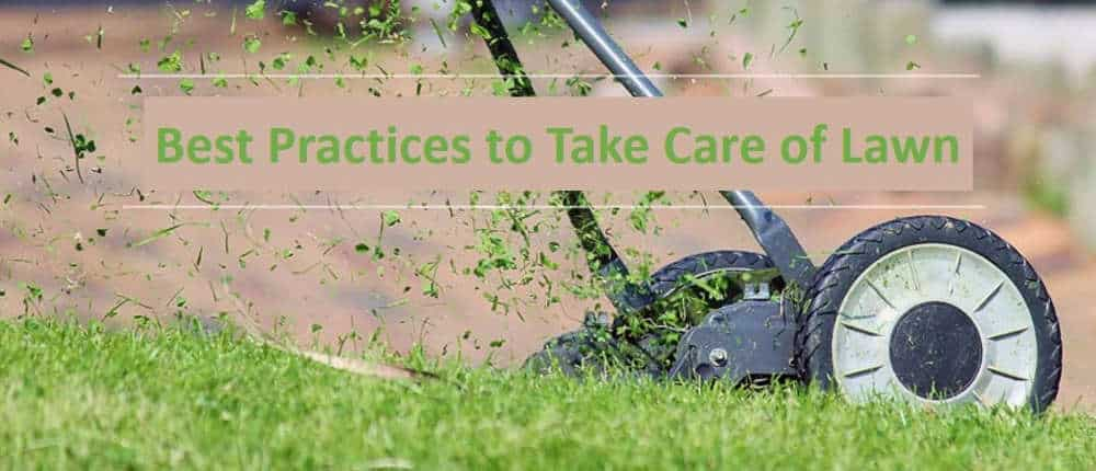 Best Practices to Take Care of Lawn