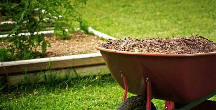 Mulching The lawn