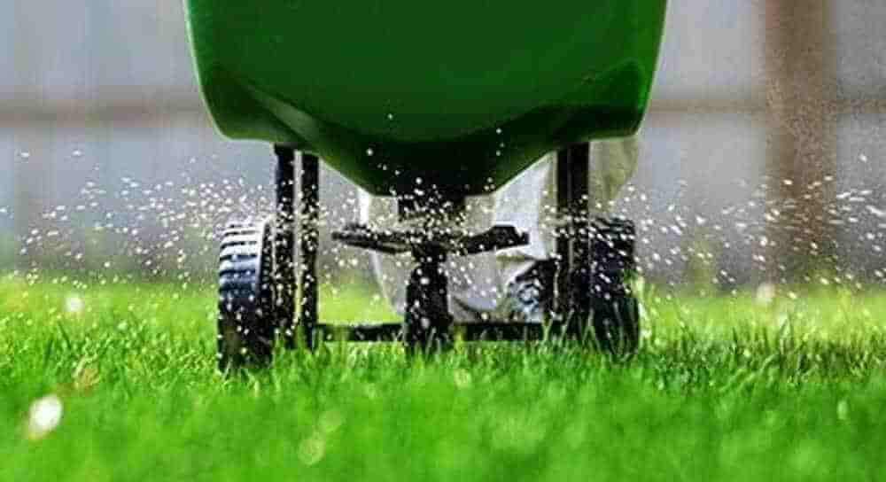 fertilization in lawn