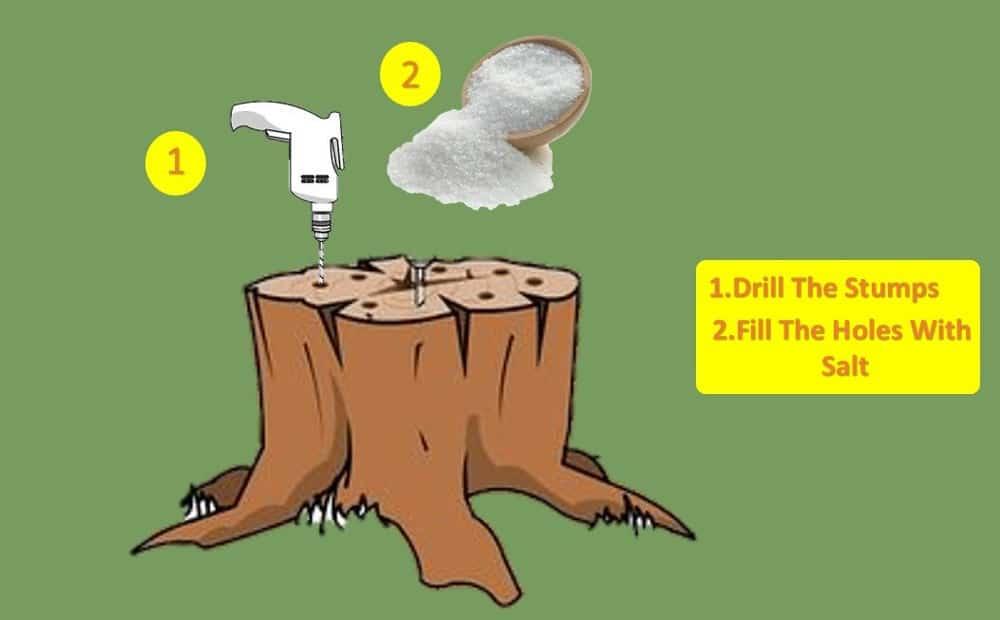 kill a stumps with salts