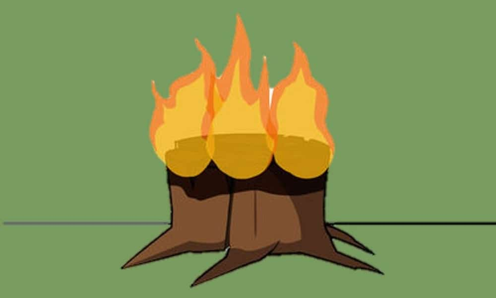 kill the stump with fire