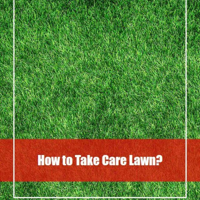 How to Take Care Lawn: Lawn Care Calendar for Beginners