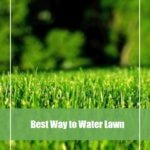 Best time & way to water lawn: Get all questions answered