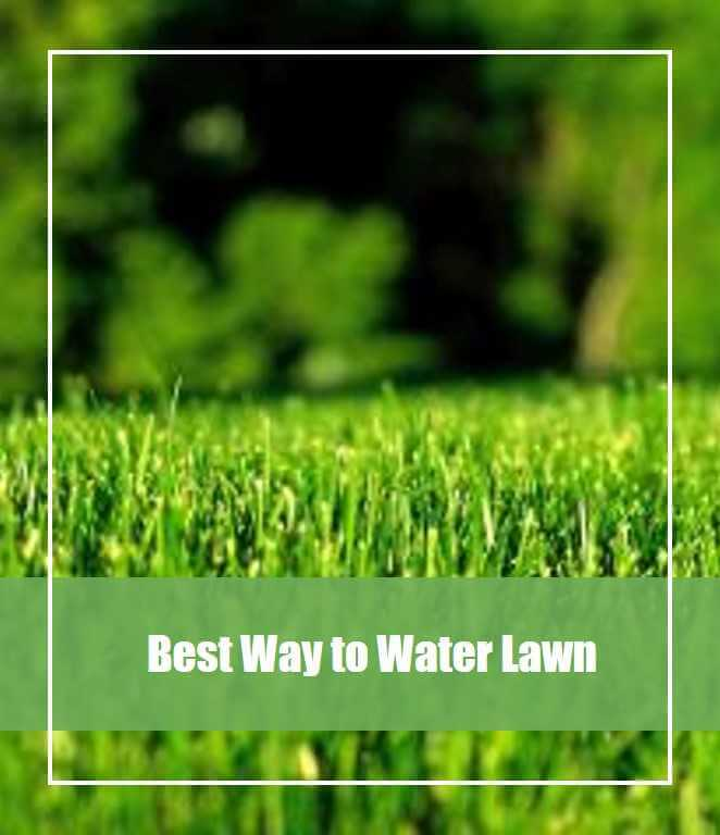 best way to water lawn