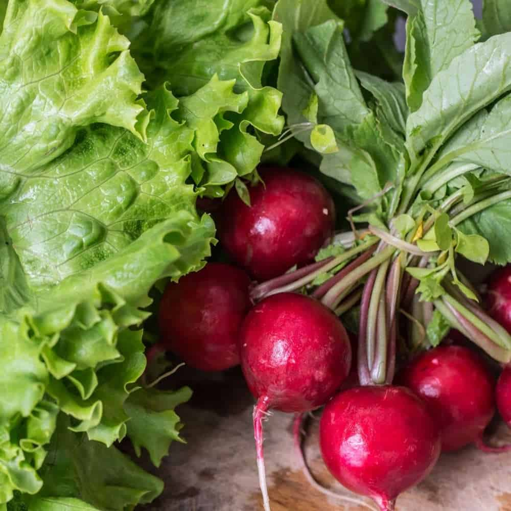 Are Radish Leaves Edible? Read Before Throw Radish Leaves