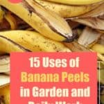 15 uses of banana peel in garden and daily life [How to Guide]