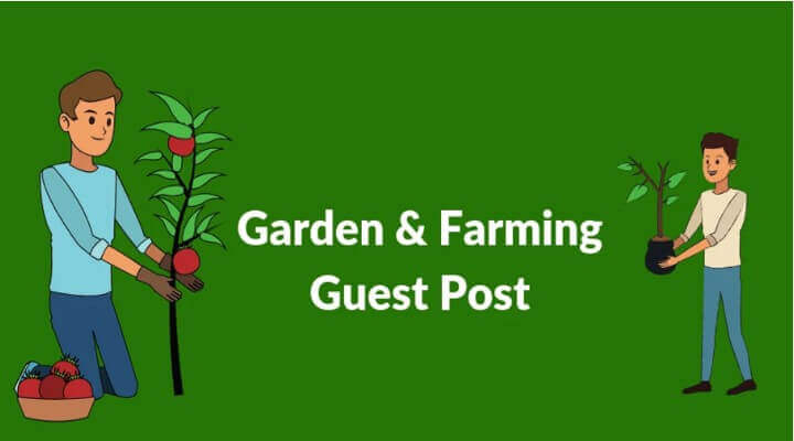 Write For Us – Submit Gardening Experiment & Growing Guide