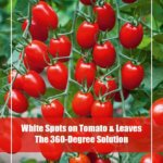 The Ultimate Guide to Treat White Spots on Tomato and Leaves