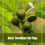 7 Best Fertilizer for Fig Trees 2020- Reviews and Guide