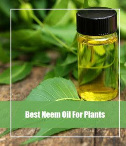 Best Neem Oil For Plants