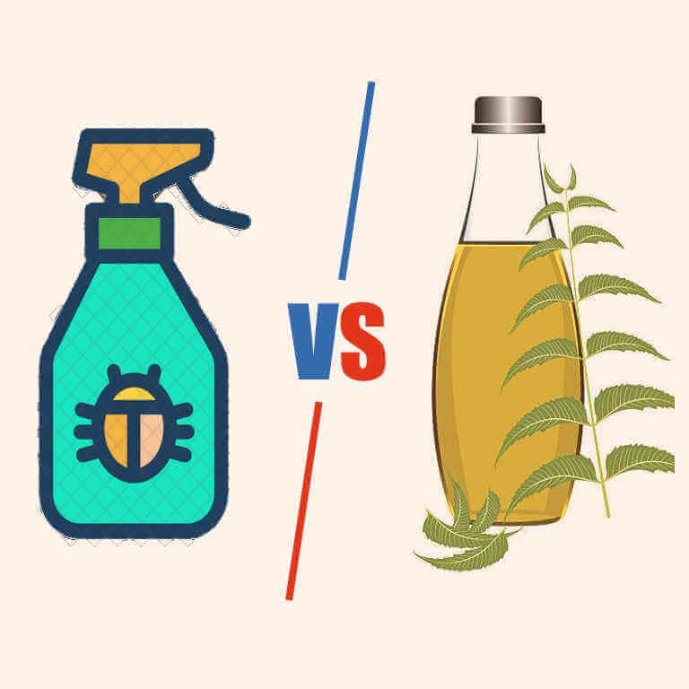 Insecticidal soap vs neem oil–Finding the perfect way to save plant