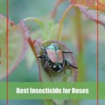 7 Best Insecticide for Roses 2020 [Reviews & Buying Guide]