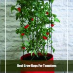 10 Best Grow Bags for Tomatoes 2020 [Top Picks & Guide]