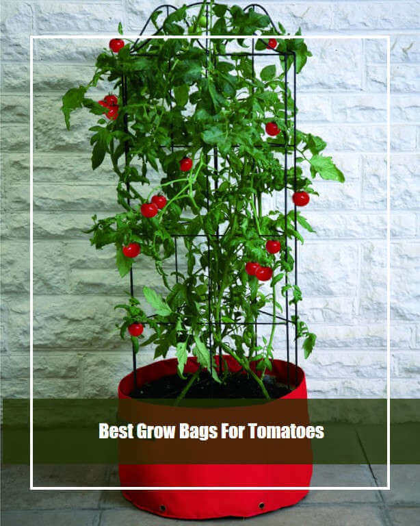 Best Grow Bag For Tomato