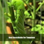 10 Best Insecticide for Tomatoes 2020 [Reviews & Guide]
