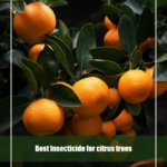 7 Best Insecticide for Citrus Trees 2020 [Reviews & Guide]
