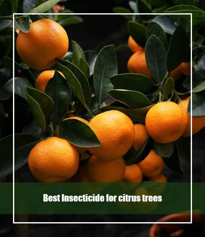 Best Insecticide for citrus trees