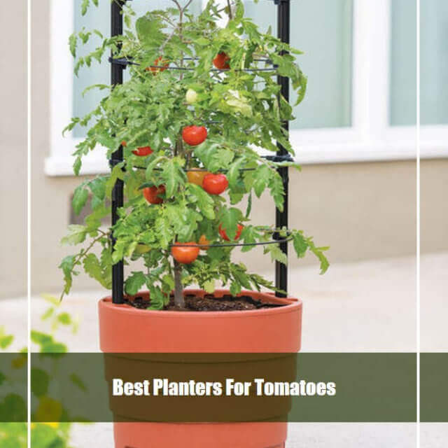 18 Best Tomato Planters 2021 [Top Picks & Reviews]