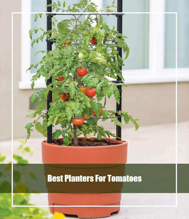 Best Planters For Tomatoes
