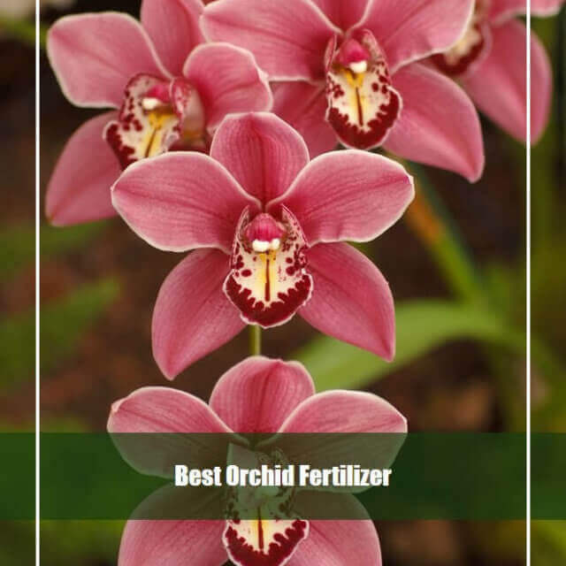 10 Best Orchid Fertilizer Reviews 2020 [Top Picks & Guide]
