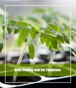 best potting soil for tomato
