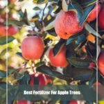7 Best Fertilizer for Apple Trees 2020 [Reviews & Guide]