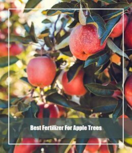 Best Fertilizer For Apple Trees
