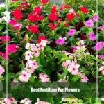 10 Best Fertilizer for Flowers 2020 [Top Picks & Guide]