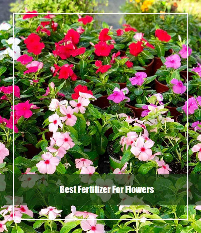 10 Best Fertilizer for Flowers 2020 [Top Picks & Guide]