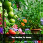 8 Best Fertilizer for Garden 2020 [Reviews & Guide]