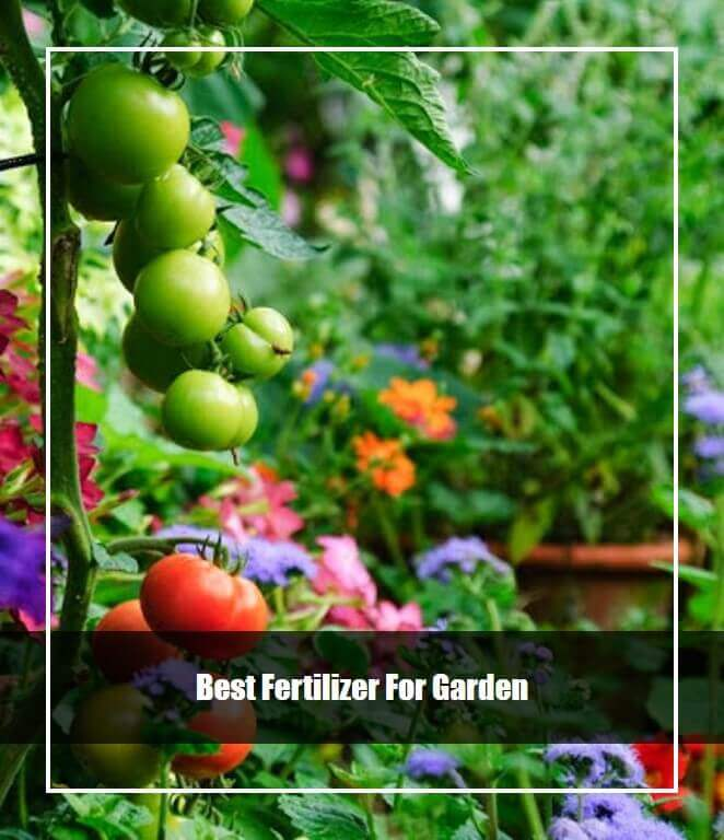 Best Fertilizer For Garden