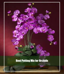 Best Potting Mix for Orchids