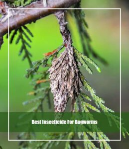 Best Insecticide For Bagworms