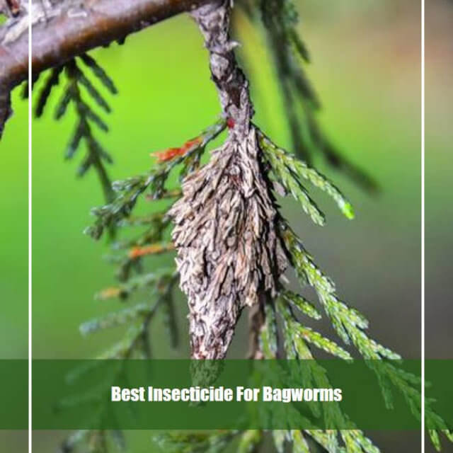 10 Best Insecticide for Bagworms 2020 [Reviews & Guide]