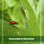 7 Best Insecticide for Red Lily Beetle 2020 [Reviews & Guide]