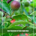 8 Best Fungicide for Cedar Apple Rust 2021 [Reviews & Guide]