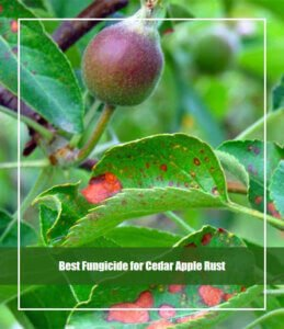 Best Fungicide for Cedar Apple Rust