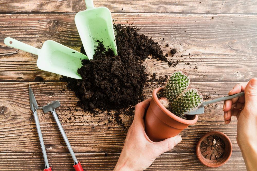 use garden soil succulents